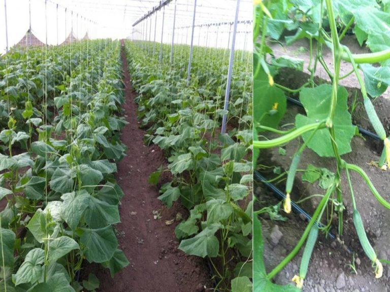 lebanese_farm-768x576