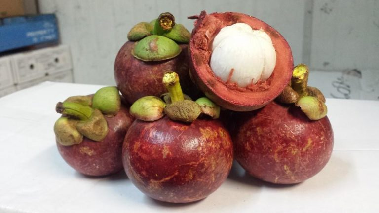 Mangosteen is a not only fresh and juicy but bring along itself incredible health benefit